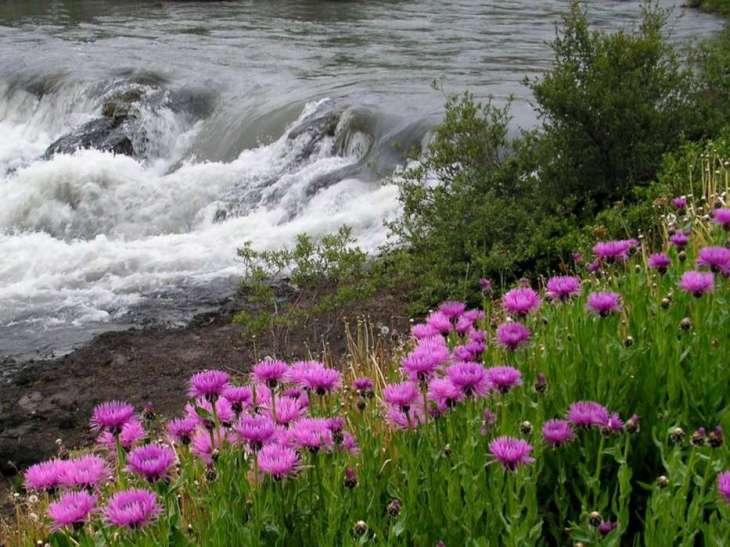 rio e flor